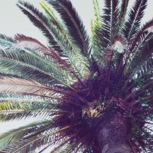 Hotta Henne - Sunday Reggae Joint- free podcast